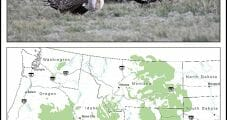 Industry Files Lawsuit Against Federal Sage Grouse Plan